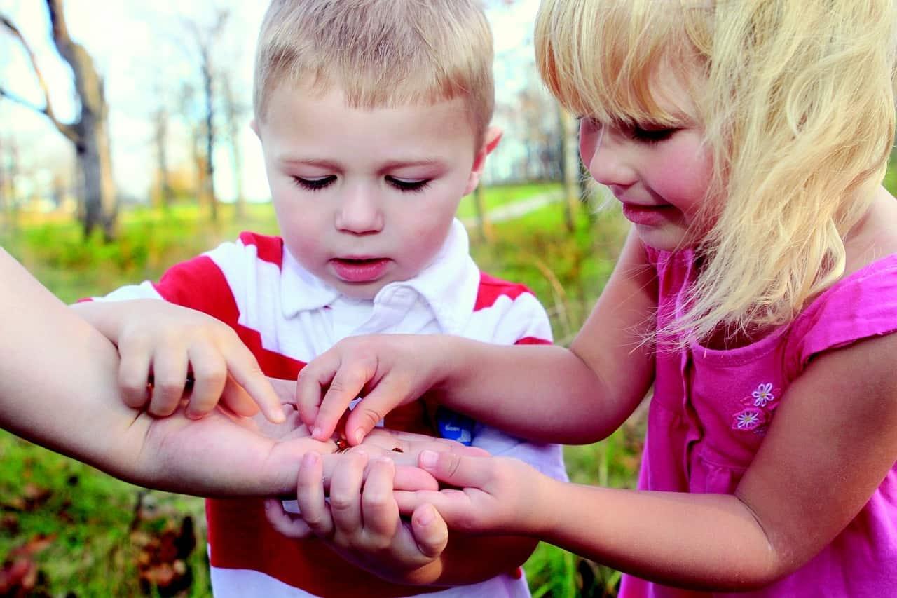 Kindergartenkinder untersuchen Marienkäfer